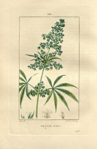 cbdsuisse-cbd-cannabisculture-cbdlife-cannabismedicinal-swisscbd-cannabis-marijuana-weed-hemp-swisscannabis-cannabislegal-swissmade-medicalmarijuana-cbdhemp-cbdhanf-swisshemp-03