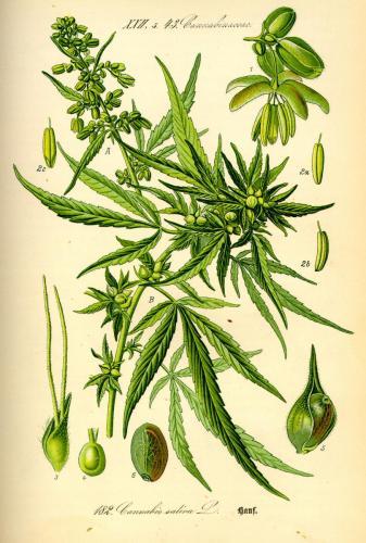 cbdsuisse-cbd-cannabisculture-cbdlife-cannabismedicinal-swisscbd-cannabis-marijuana-weed-hemp-swisscannabis-cannabislegal-swissmade-medicalmarijuana-cbdhemp-cbdhanf-swisshemp-13