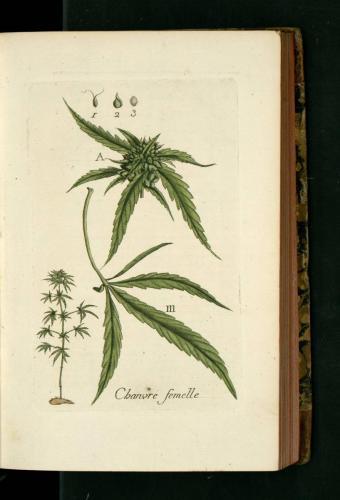 cbdsuisse-cbd-cannabisculture-cbdlife-cannabismedicinal-swisscbd-cannabis-marijuana-weed-hemp-swisscannabis-cannabislegal-swissmade-medicalmarijuana-cbdhemp-cbdhanf-swisshemp-20