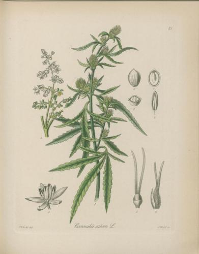 cbdsuisse-cbd-cannabisculture-cbdlife-cannabismedicinal-swisscbd-cannabis-marijuana-weed-hemp-swisscannabis-cannabislegal-swissmade-medicalmarijuana-cbdhemp-cbdhanf-swisshemp-24