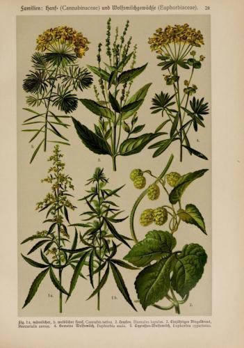 cbdsuisse-cbd-cannabisculture-cbdlife-cannabismedicinal-swisscbd-cannabis-marijuana-weed-hemp-swisscannabis-cannabislegal-swissmade-medicalmarijuana-cbdhemp-cbdhanf-swisshemp-27