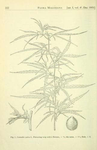 cbdsuisse-cbd-cannabisculture-cbdlife-cannabismedicinal-swisscbd-cannabis-marijuana-weed-hemp-swisscannabis-cannabislegal-swissmade-medicalmarijuana-cbdhemp-cbdhanf-swisshemp-29