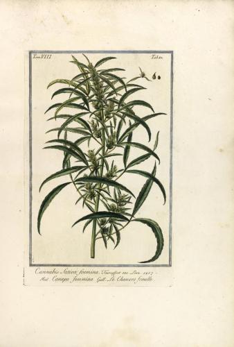 cbdsuisse-cbd-cannabisculture-cbdlife-cannabismedicinal-swisscbd-cannabis-marijuana-weed-hemp-swisscannabis-cannabislegal-swissmade-medicalmarijuana-cbdhemp-cbdhanf-swisshemp-34