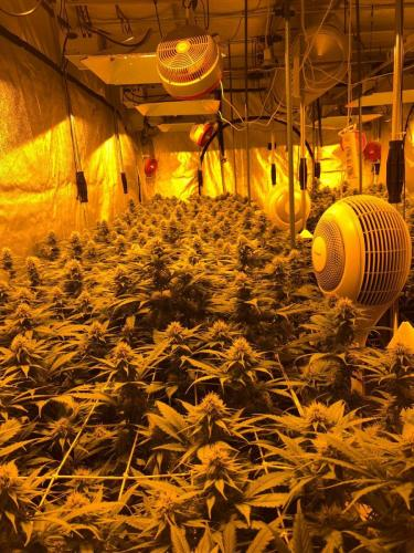 leriff-riff-Vente en Gros de CBD Suisse-Grossiste de cannabis légal-suisse-09