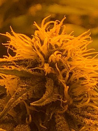 leriff-riff-Vente en Gros de CBD Suisse-Grossiste de cannabis légal-suisse-16