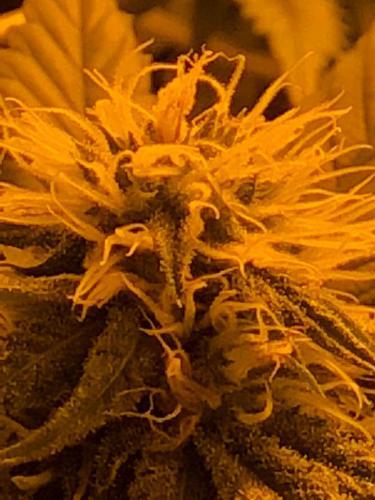 leriff-riff-Vente en Gros de CBD Suisse-Grossiste de cannabis légal-suisse-24